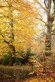 Autumn gardens Royalty Free Stock Photography