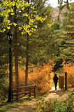 Autumn Gate Stock Image