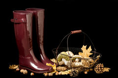 Autumn. Gathering of mushrooms. Rubber boots Burgundy color on a. Black background stock photography