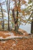Autumn in Gdynia. Autumnal trees on Kepa Redlowska cliff-like Baltic Sea coastline in Gdynia, Poland Royalty Free Stock Photo