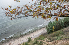 Autumn in Gdynia. Autumnal trees on Kepa Redlowska cliff-like Baltic Sea coastline in Gdynia, Poland Stock Photo
