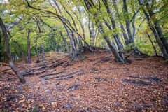 Autumn in Gdynia. Autumnal trees on Kepa Redlowska cliff-like coastline in Gdynia, Poland Royalty Free Stock Images