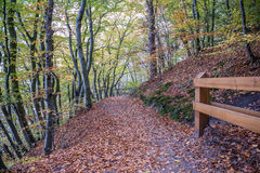 Autumn in Gdynia. Autumnal trees on Kepa Redlowska cliff-like coastline in Gdynia, Poland Stock Image