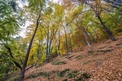 Autumn in Gdynia. Autumnal trees on Kepa Redlowska cliff-like coastline in Gdynia, Poland Stock Photos