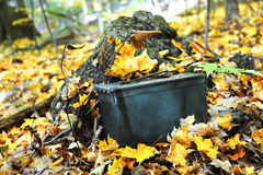 Autumn Geocaching. Military ammunition box is used for this geocaching activity.  It sits camouflaged on the forest floor covered with Autumn leaves Stock Photography