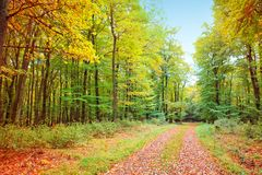Autumn German forest with sun beam and road. Royalty Free Stock Photography