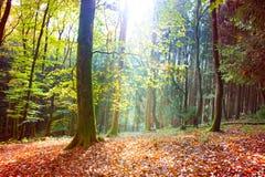 Autumn German forest with sun beam. Stock Photos