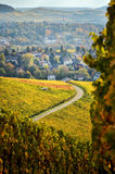 Autumn german landscape with the view on vineyards. German vineyards in autumn with a lane to the village Royalty Free Stock Images