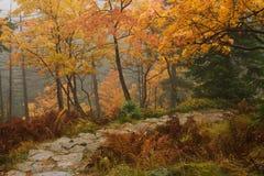 Autumn in the Giant Mountains. White Elbe Valley in the Giant Mountains in the Czech Republic Stock Photos