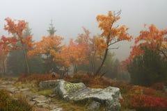 Autumn in the Giant Mountains. White Elbe Valley in the Giant Mountains in the Czech Republic Royalty Free Stock Image