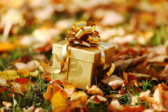 Autumn gift Royalty Free Stock Photography