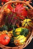 Autumn Gifts. Stock Images