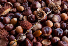 Autumn gifts. Chestnuts, acorns, fir-cones in a pile Royalty Free Stock Photography