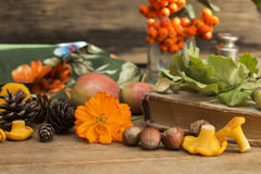 Autumn gifts. Close up on a wooden background royalty free stock image
