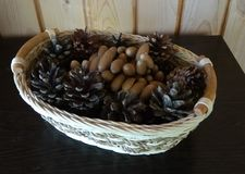Autumn gifts, cones and acorns. royalty free stock photos