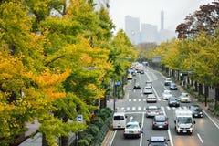 Autumn Ginkgo tree corridor in Japan Royalty Free Stock Photos