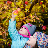 Autumn girl picking apple from tree. Autumn little girl picking apple from tree with help of her older sister