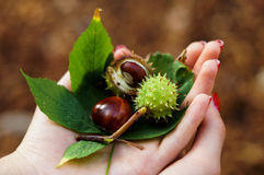 Autumn in girl's hands Royalty Free Stock Photo