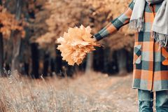 Autumn girl walking in city park. Portrait of happy lovely and beautiful young woman in forest in fall colors. Focus on. Autumn girl walking in city park stock image