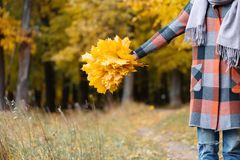 Autumn girl walking in city park. Portrait of happy lovely and beautiful young woman in forest in fall colors. Focus on. Autumn girl walking in city park royalty free stock photography