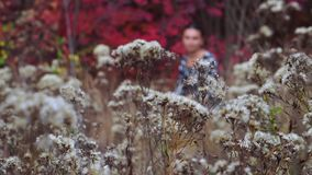 Autumn glade of flowers stock video