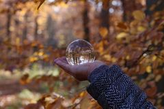 Autumn through a glass ball. Autumn compositions with glass bowl royalty free stock images