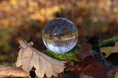 Autumn through a glass ball. Autumn compositions with glass bowl stock images