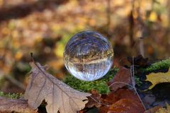 Autumn through a glass ball. Autumn compositions with glass bowl royalty free stock photography