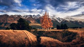 Trio of rusty trees in Glenorchy royalty free stock images