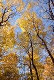 Autumn glory. Maple trees with autumn colors Stock Photo