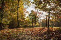 Autumn Glory Royalty Free Stock Photo