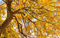 Autumn Glory Royalty Free Stock Images