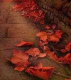 Autumn glow. Beautiful dry autumn leaves lying in late evening on a pavement Stock Images