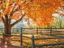 Autumn Glow Imagen de archivo libre de regalías
