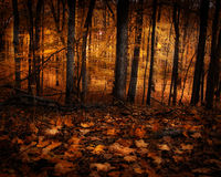 Autumn Glow Royalty Free Stock Photo