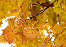 Autumn Glow Fotografía de archivo libre de regalías