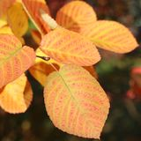 Autumn Glow Foto de archivo libre de regalías