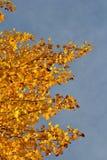 Autumn Glow Foto de archivo