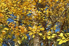 Autumn Glow Fotos de archivo libres de regalías