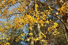 Autumn Glow Imágenes de archivo libres de regalías