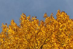 Autumn Glow Imagen de archivo