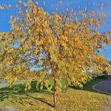 Autumn Glow Imagenes de archivo
