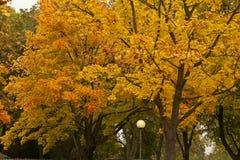 An Autumn Glow Stock Photos