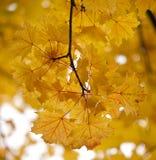 Autumn Glow. Stock Photos