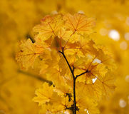 Autumn Glow. Stock Photography