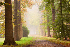Autumn Glow. Autumn scenery of trees lane in a foggy day stock photography