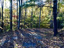 Autumn Gold photographie stock libre de droits
