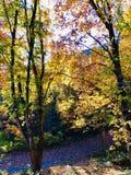 Autumn Gold photo libre de droits