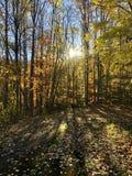 Autumn Gold photographie stock