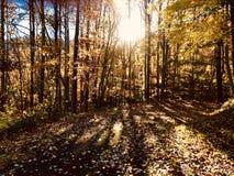 Autumn Gold photo stock